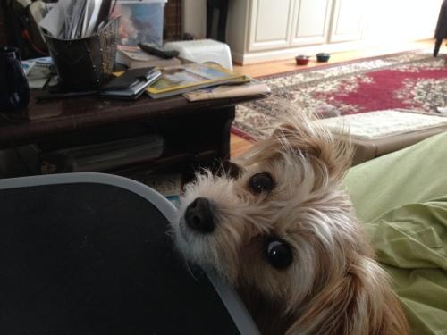 trixie eyes