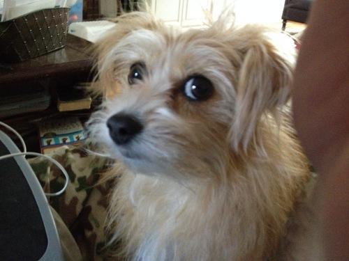 trixie big eyes