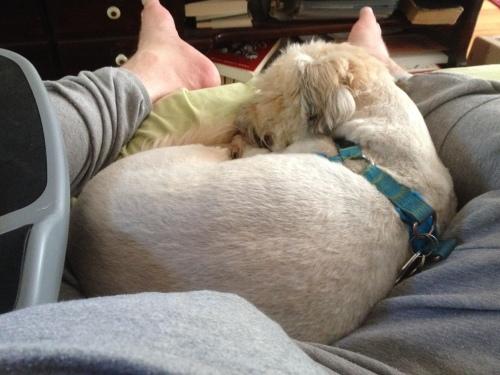 lap-dog2