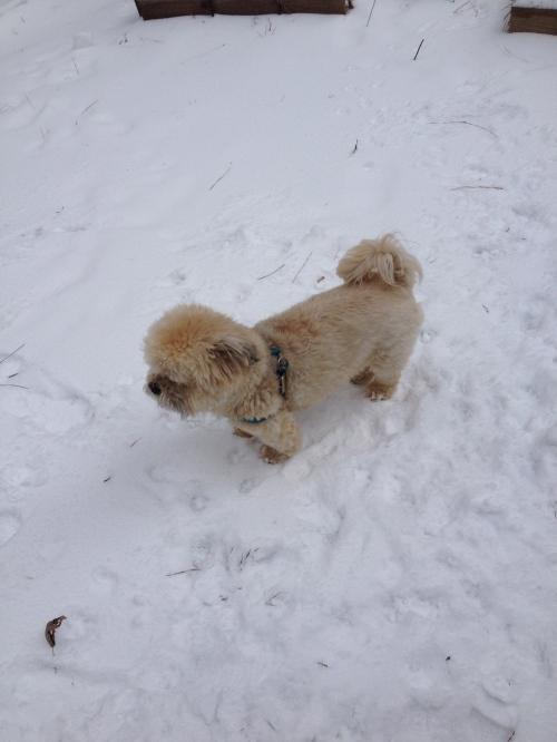 snow-plush