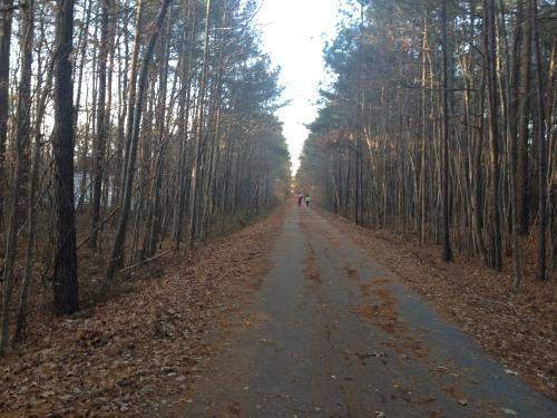 tree-path